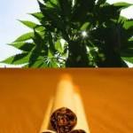Il fumo di Cannabis è meno dannoso del fumo di tabacco