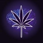 Cannabis e Cervello – La Verità e gli Studi