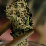 La Cannabis Medica e Nuovi Mercati