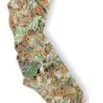 Legalizzazione: L'esempio Californiano è applicabile