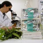 Usi medici della Cannabis e del THC