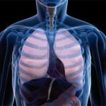 Studio: Il fumo di Cannabis non danneggia la Funzione Polmonare