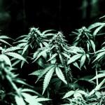 Curare l'Artrite con la Cannabis