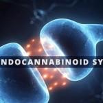 Il Sistema degli Endocannabinoidi: Cannabis e Appetito