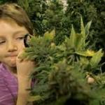 L'American Academy of Pediatrics invita a rischedulare la Cannabis