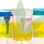 5 rimedi di emergenza per smaltire il THC dalle Urine