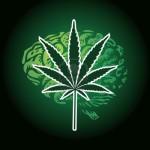 La Cannabis Non danneggia il Cervello Umano