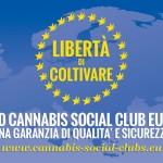 ENCOD Cannabis Social Clubs Europei: una garanzia di qualità e sicurezza