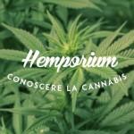 Hemporium – Conoscere la Cannabis: Il CBN