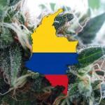 La Colombia legalizza la Cannabis per uso medico