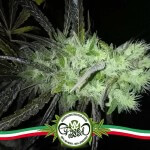 Legalizzazione: Pregiudizi o Interessi? Riflessioni…