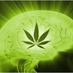 Consumi Cannabis abitualmente e da un lungo periodo? Ecco cosa succede...
