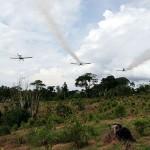 """""""War on Drugs"""" : Danni anche al nostro Ecosistema!"""