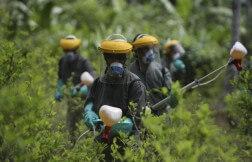 Ambiente guerra alla droga
