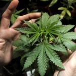Lo Stato di Victoria, in Australia, legalizza la cannabis a livello medico