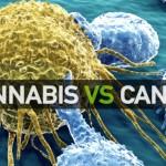 Nuovo Studio: La Cannabis può potenzialmente aiutare i pazienti contro il cancro