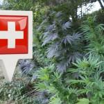 Progetto di distribuzione della Cannabis in Svizzera