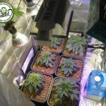 Controllare il profumo in una Grow Room