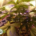 I principali metodi di coltivazione