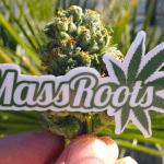 """MassRoots, il """"Facebook della Cannabis"""" vuole entrare in Borsa"""