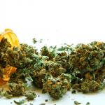 Cannabis di Stato nelle Farmacie italiane