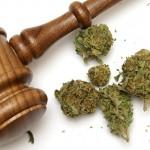 La Sentenza del 9 marzo: La coltivazione di cannabis per uso personale è condotta penalmente rilevante