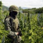 E' pronta la Cannabis Terapeutica di Stato