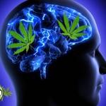 Studio: Cannabinoidi possono rimuovere le placche dell'Alzheimer dalle cellule cerebrali