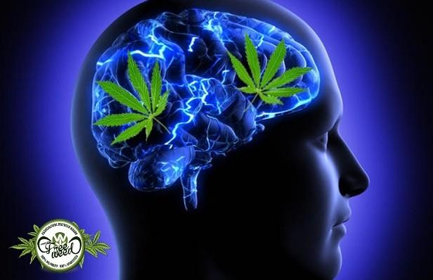 Marijuana-On-The-Brain-1