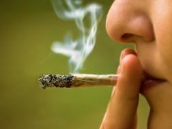 Use Cannabis1
