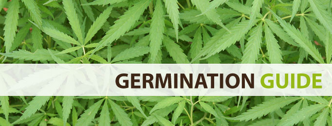 La delicata fase di germinazione