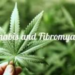 La Cannabis si qualifica come il miglior trattamento per la fibromialgia