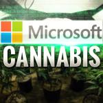 Odore di cannabis nella nuvola Microsoft