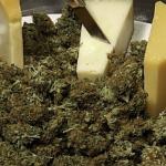 """Perchè alcuni ceppi di cannabis hanno un profumo simile al """"formaggio""""?"""