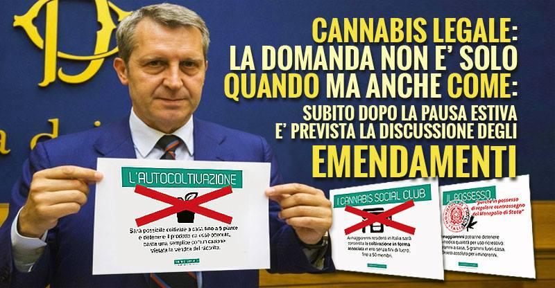 """DDL """"Cannabis Legale"""": 340 emendamenti contro la Coltivazione Personale"""