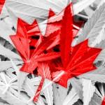 In Canada i pazienti potranno auto-coltivare la cannabis