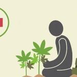 Cannabis Terapeutica: La situazione in Europa