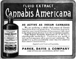 1800 cannabis