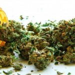 "E' pronta la ""Medical Cannabis di Stato"": da ottobre 2016 in farmacia"