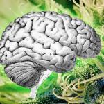 Cannabis e Emicrania: una possibile nuova opzione di trattamento?