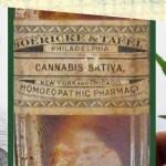 L'olio di Cannabis ha trattato l'epilessia già 173 anni fa