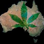 In Australia si studia una pillola di CBD contro l'Epilessia
