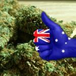 In Australia tramite licenza si potrà coltivare cannabis per fini terapeutici