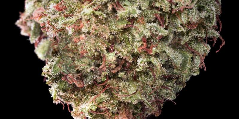 cannabis-cuore