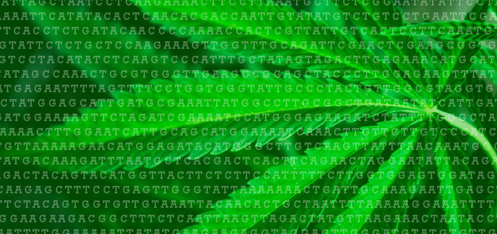 cannabis-genome-drpage-02-017-720x340