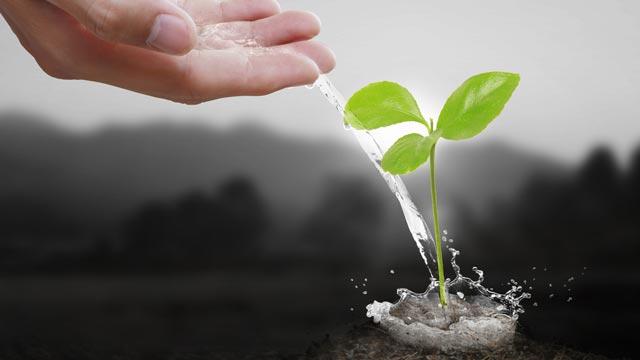 """Tecniche di coltivazione a """"Basso Stress"""" e ad """"Alto Stress"""": LST & HST"""