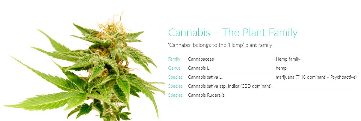 Cannabis Anatomy: Le parti della Pianta