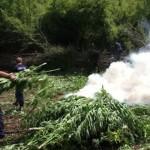 ALBANIA – Coltivazioni cannabis quintuplicate in un anno: il Presidente della Repubblica convoca Consiglio nazionale sicurezza