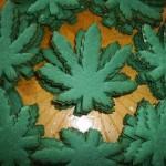 """Studio: THC/CBD stabili in un """"biscotto"""" fino a 3 mesi dalla preparazione"""