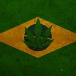 Brasile: Concessa l'autoproduzione ad una famiglia per trattare le crisi epilettiche della figlia